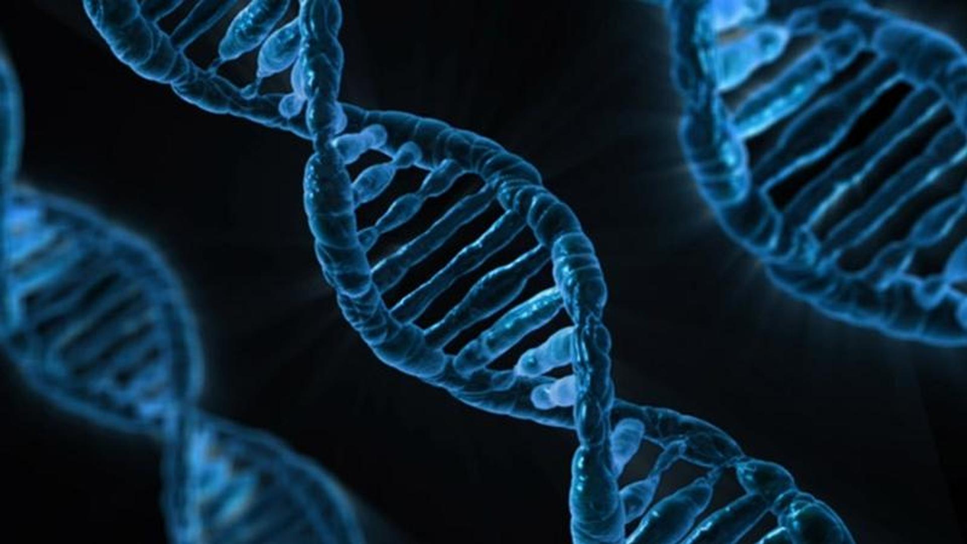 Ziekten bij roofvogels en uilen - DNA besmetting