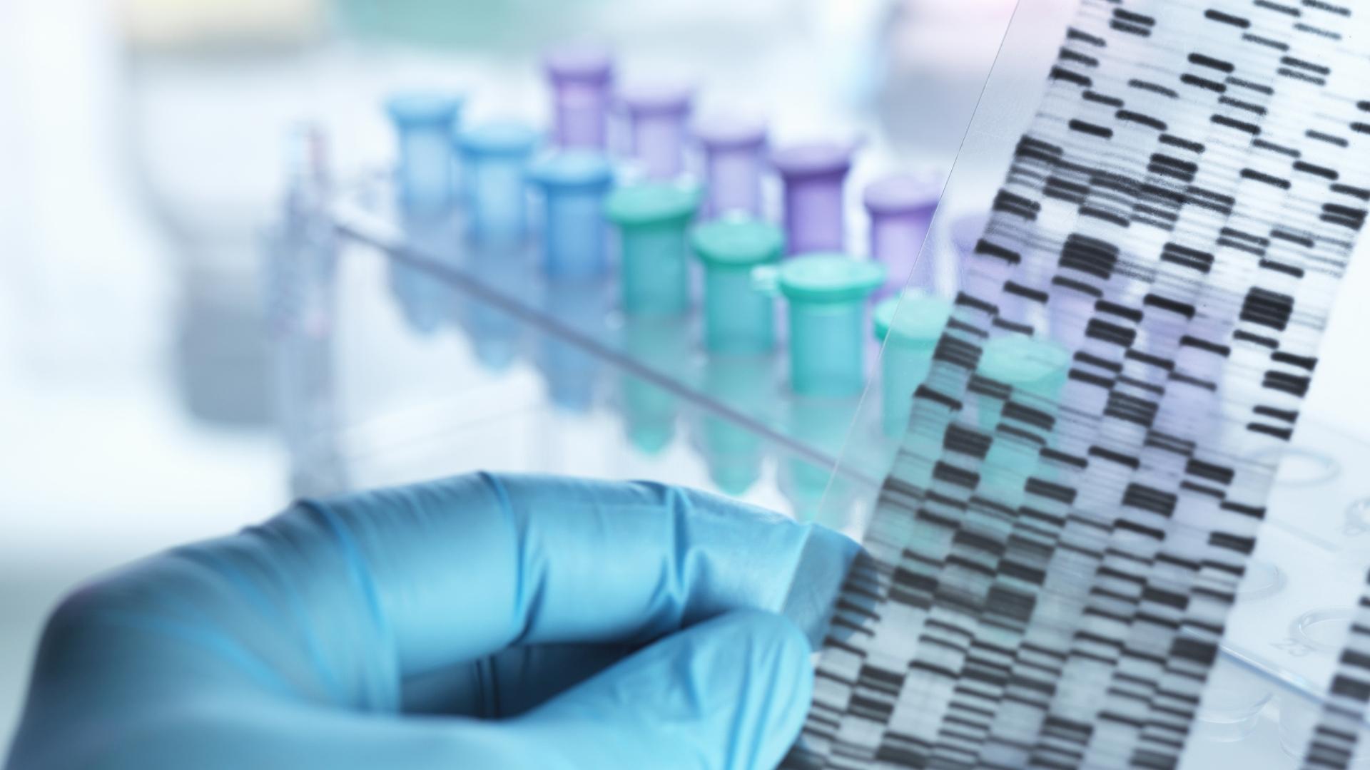 Ziekten bij roofvogels en uilen - DNA geslachtsbepaling