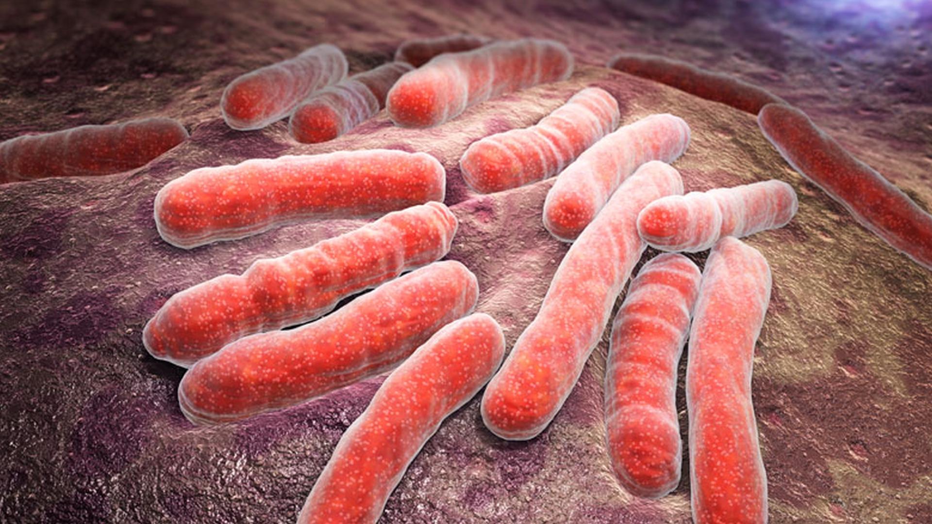 Ziekten bij roofvogels en uilen - Tuberculose