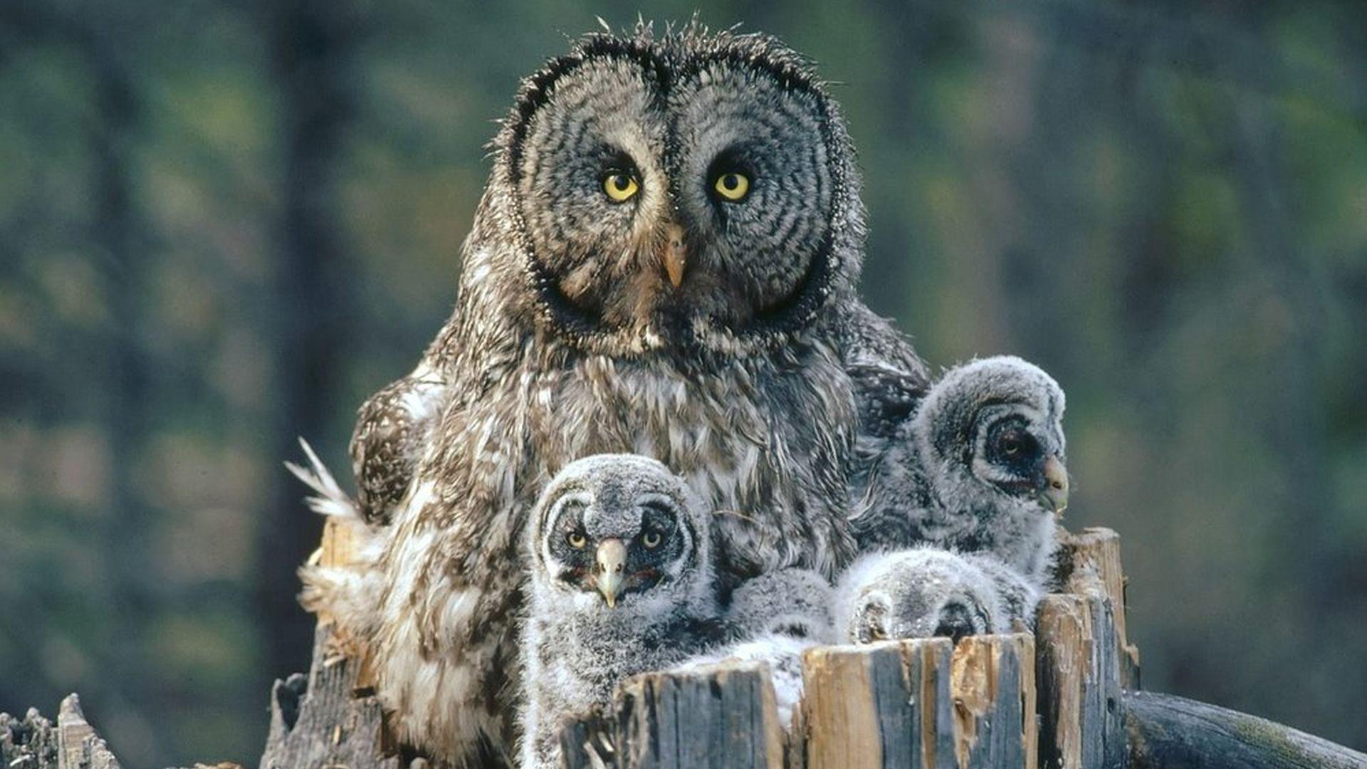 Verzorging nestjongen