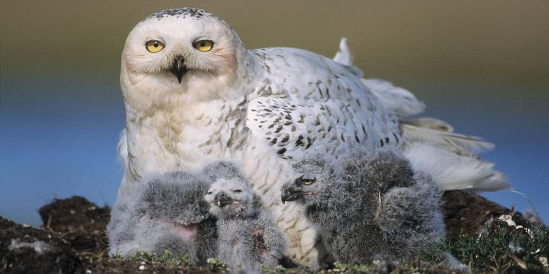 Nestkasten voor roofvogels